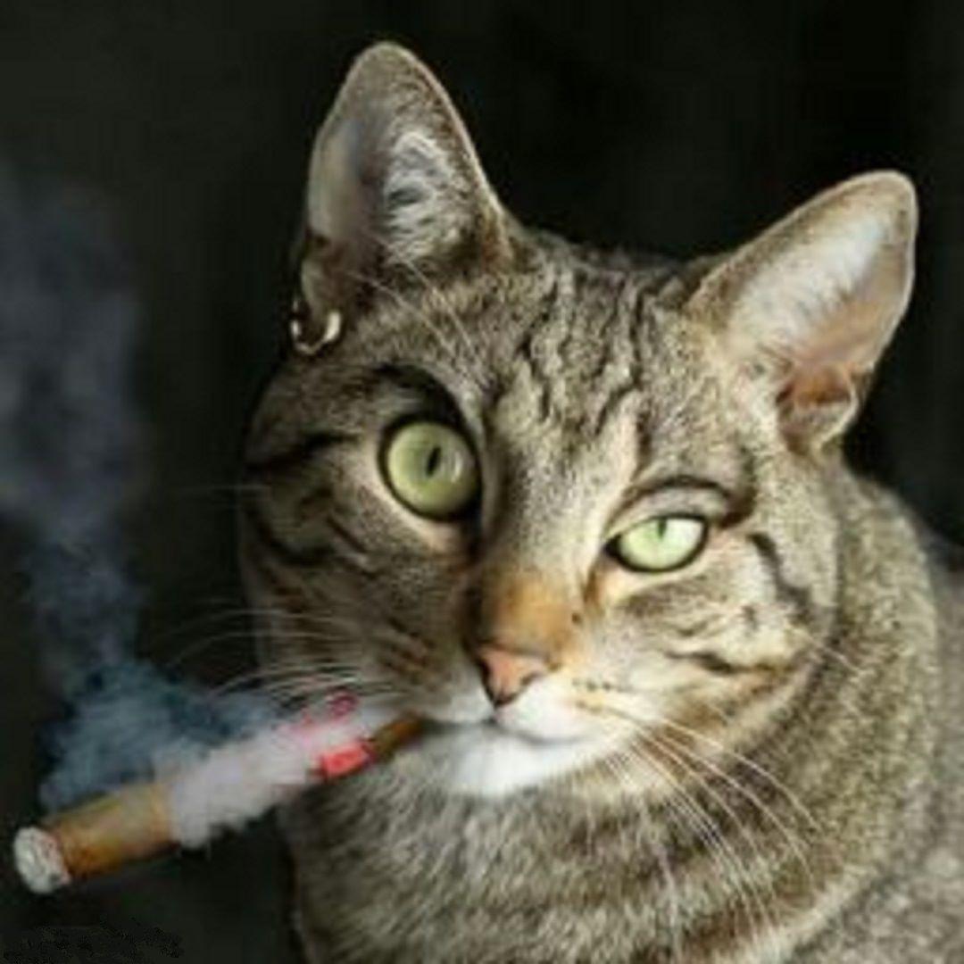 Открытки котов с сигаретой, правильно